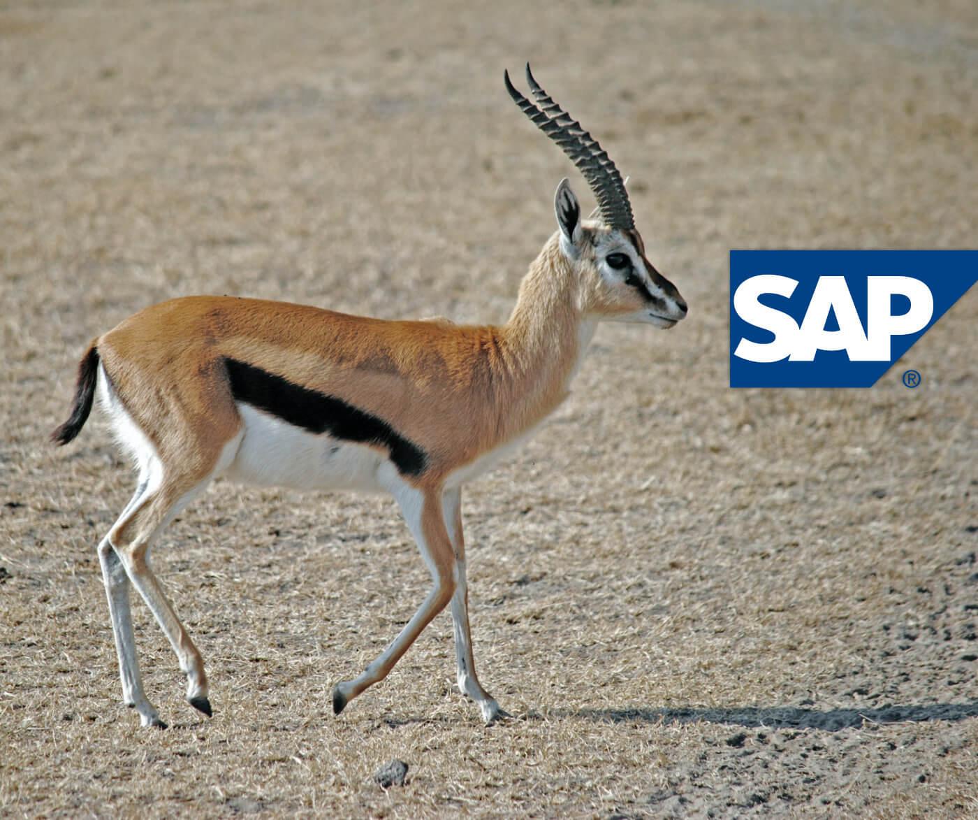 SAP übernimmt Berliner Startup für 1 Milliarde Euro